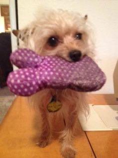 Pets-Mendonca-4-9-2016-toy