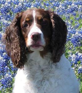 Pets-Stringer-4-30-16-Belle