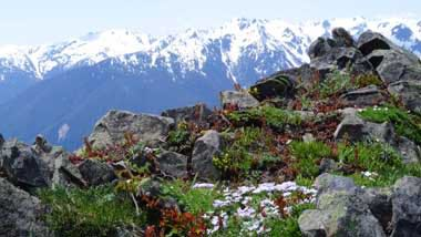 Olympic Mountains RVT 745