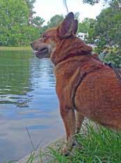 Pets-Lombardo-6-18-2016-lake