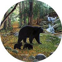 Early morning black bears tire cover