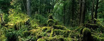 Hoh Rain Forest, nps.gov
