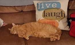 Pets-Masters-7-23-2016-cat