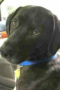 Pets-Schneider-8-11-2016