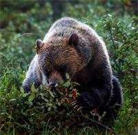 bearnberries-761