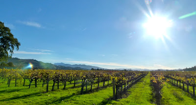 napavalley-6-vineyard-juliannegcrane
