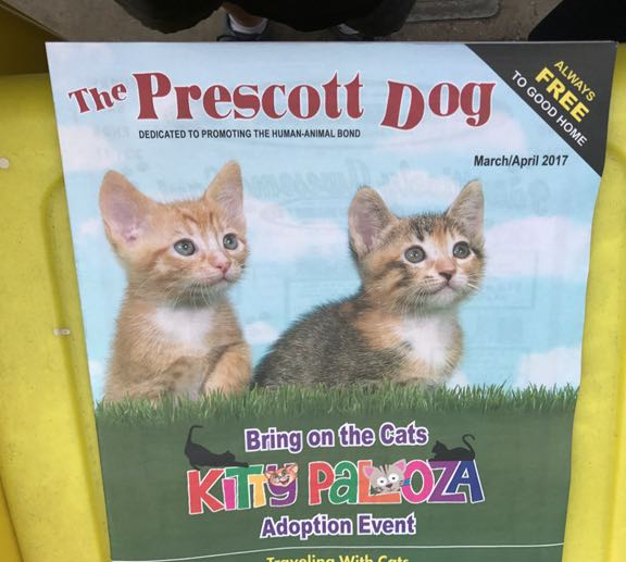 Dogs that are cats, or is it the other way around?