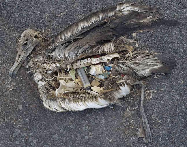 The evil of plastic. Beware: Photo is disturbing