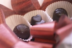Dogs or cats and chocolate: Lethal combination?