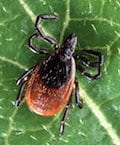 Are you ticked off by ticks?
