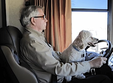 Do you drive with a dog on your lap?