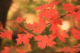 Best places to camp for fall leaf peeping