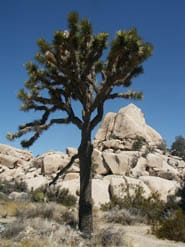 Joshua Tree NP closures announced due to heavy rains and flooding