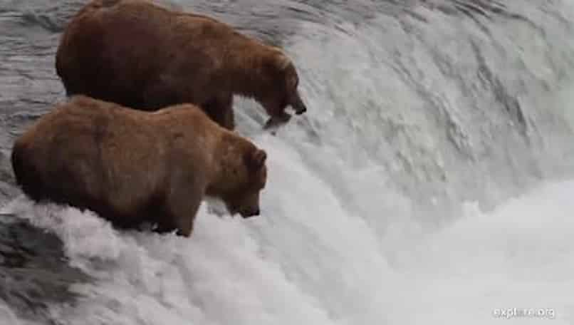 Discover culture, history and fat bears in Alaska's national parks