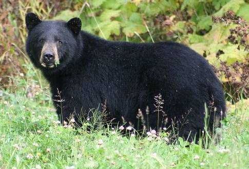 What to do when encountering a bear in the woods