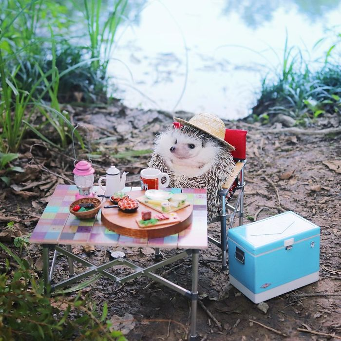 Azuki the hedgehog goes camping