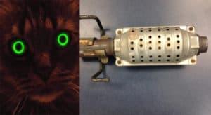 paint your cat