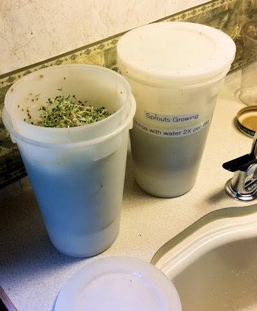 Grow some sprouts for fun and nutrition